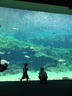 水の中の魚の写真・画像素材[960435]