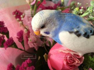ピンクの花束とインコのクローズアップの写真・画像素材[2833133]