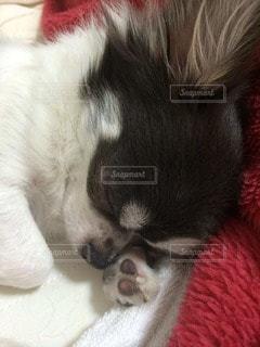 犬の写真・画像素材[109527]