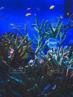 水中の写真・画像素材[2888388]