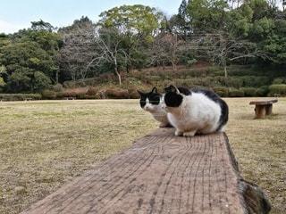 猫の写真・画像素材[2867321]