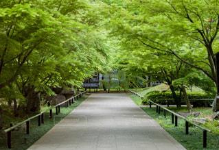 新緑の道の写真・画像素材[2837631]