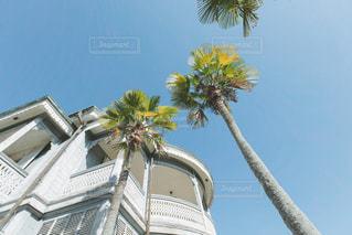 建物の側面にあるヤシの木の写真・画像素材[2858376]
