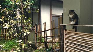 猫の写真・画像素材[133917]