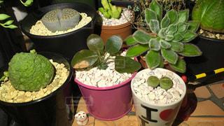 植物 - No.133923