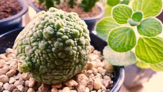 植物の写真・画像素材[133934]