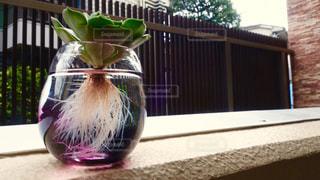 植物の写真・画像素材[133991]