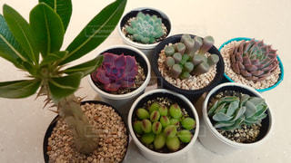 植物 - No.134056
