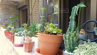 植物の写真・画像素材[134064]