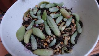 植物の写真・画像素材[134099]