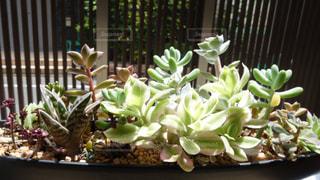 植物の写真・画像素材[134121]