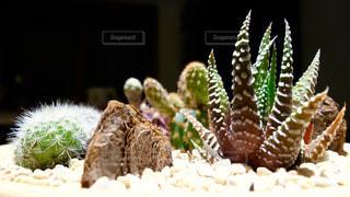 植物の写真・画像素材[134135]