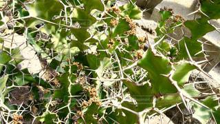 植物 - No.134199