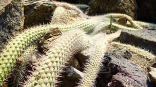 植物の写真・画像素材[134201]