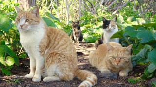 猫の写真・画像素材[134250]