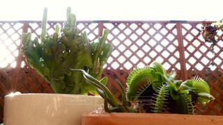 植物の写真・画像素材[134279]