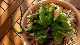 植物の写真・画像素材[134280]