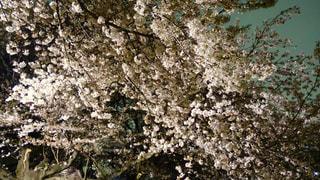 花の写真・画像素材[135115]