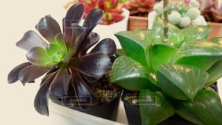 植物 - No.135192