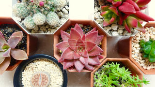 植物の写真・画像素材[137089]