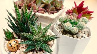 植物の写真・画像素材[137090]