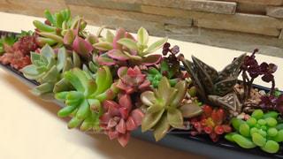 植物 - No.137101