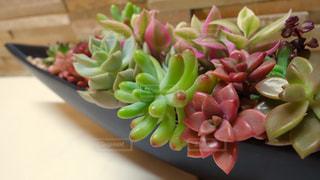植物の写真・画像素材[137104]