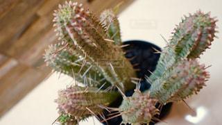 植物の写真・画像素材[137110]