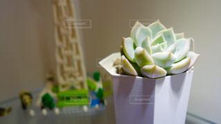 植物の写真・画像素材[137125]