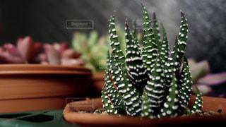 植物の写真・画像素材[137127]