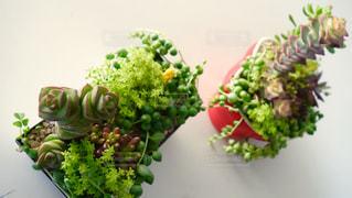 植物 - No.137135