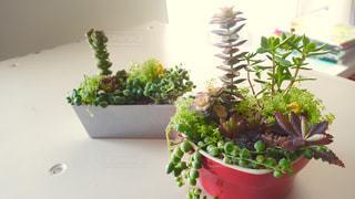 植物の写真・画像素材[137136]