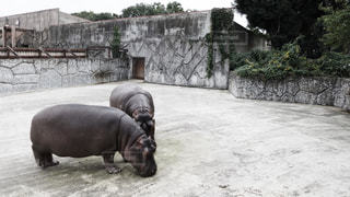 動物の写真・画像素材[138225]