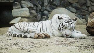 動物の写真・画像素材[138263]