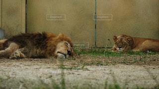 動物の写真・画像素材[138264]
