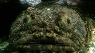 動物の写真・画像素材[138435]