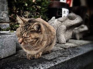 猫の写真・画像素材[140476]