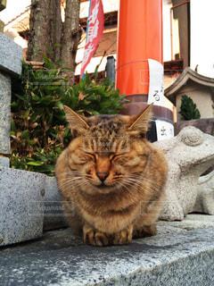 猫の写真・画像素材[140477]