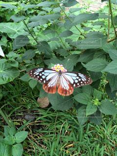昆虫の写真・画像素材[140478]