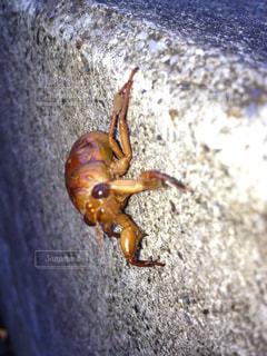 昆虫の写真・画像素材[141020]