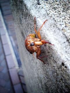 昆虫の写真・画像素材[141022]