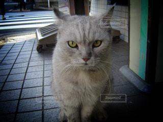 猫の写真・画像素材[146885]