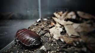 虫の写真・画像素材[189155]