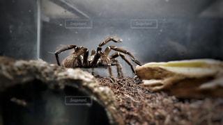 虫の写真・画像素材[189156]