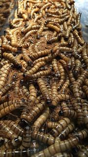 虫の写真・画像素材[189157]