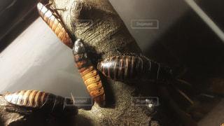虫の写真・画像素材[189158]