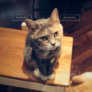 猫の写真・画像素材[249903]