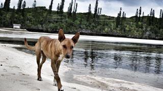 犬の写真・画像素材[354951]