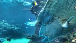 魚 - No.354957