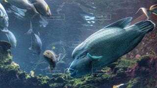 No.354967 魚